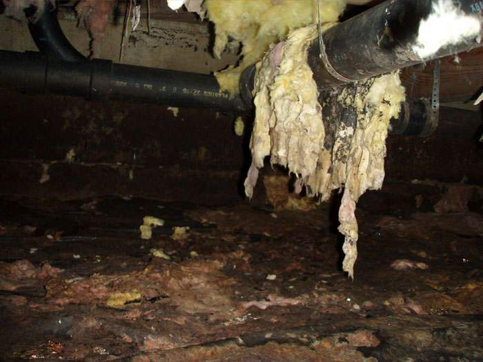 Wet & Moldy Insulation